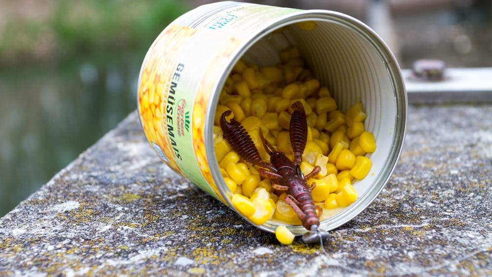 Dead Sticking auf Karpfen - Mais und reins Ring Craw