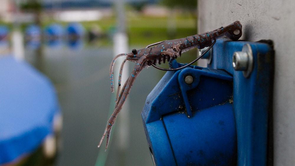 Das Neko Rig - Frill Shrimp