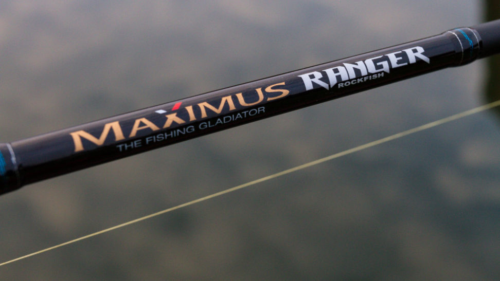 Maximus - Ranger Rockfish