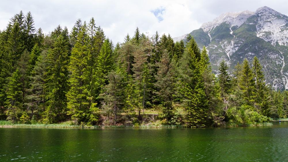 Gebirgsforelle Leutscha Weidachsee